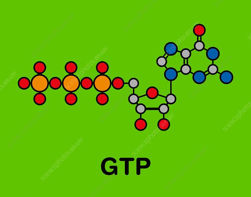Guanosine triphosphate molecule, illustration