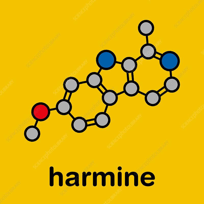 Harmine alkaloid molecule, illustration