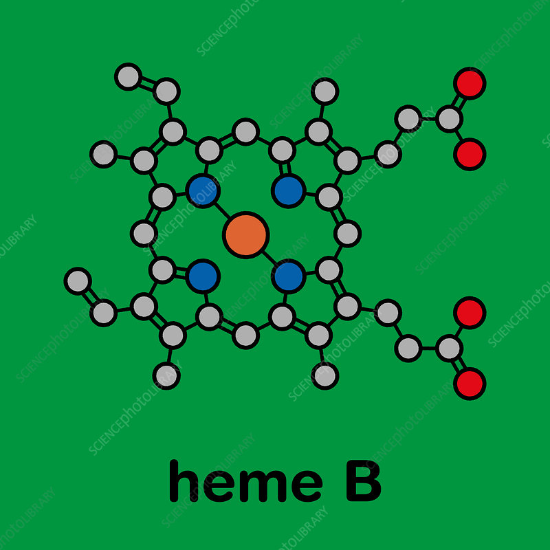 Haem B molecule, illustration