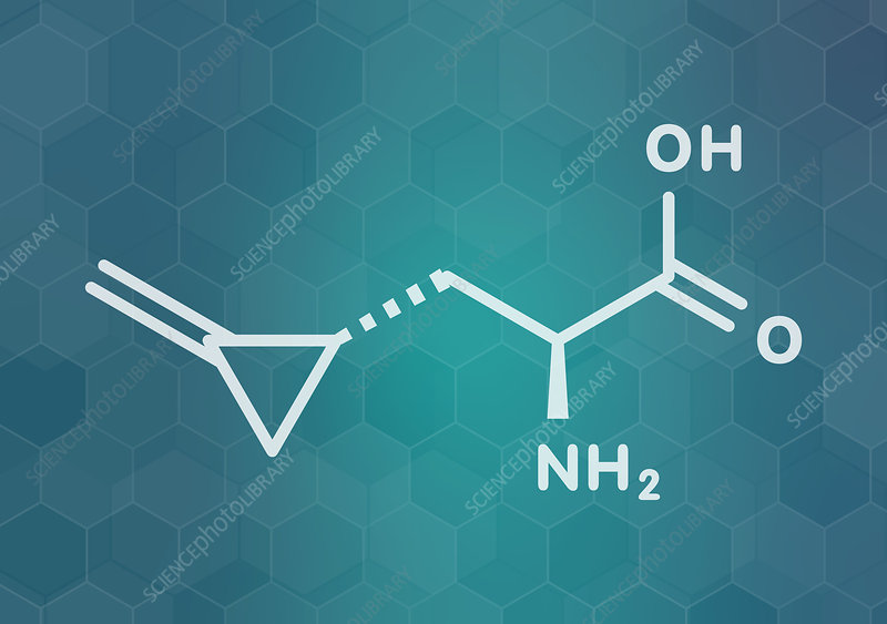 Hypoglycin A molecule, illustration