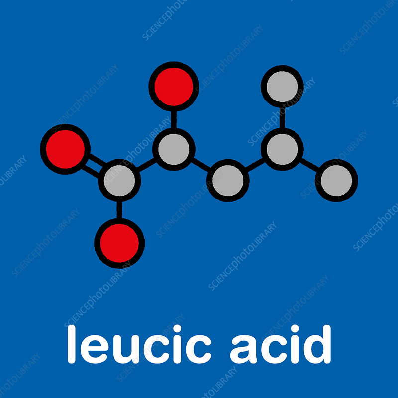 Leucic acid molecule, illustration