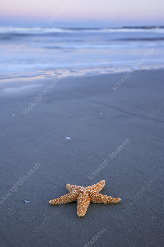 Starfish in Waves