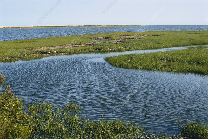 Marsh at Chincoteague, Virginia
