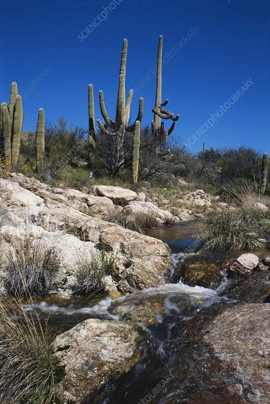 River in Saguaro National Park