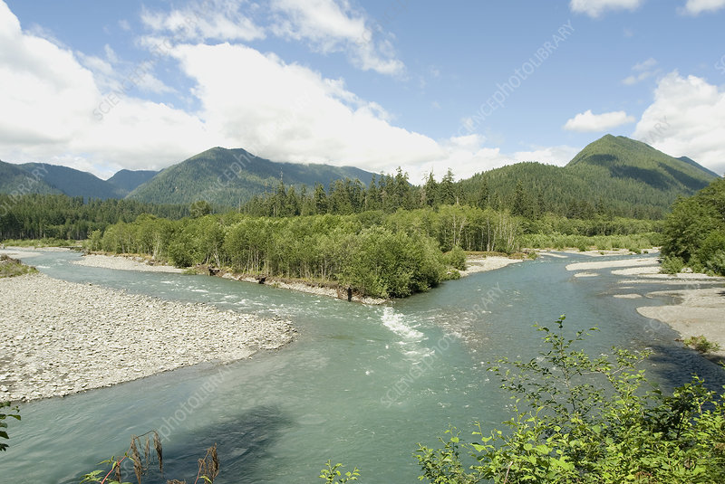 The Quinault River