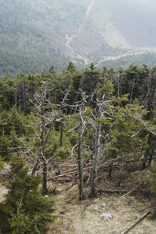 Forest Decimated by Acid Rain - Stock Image C012/1516 - enlarged ...
