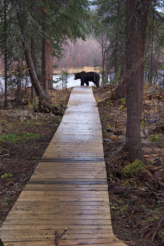 Nature Trail & Brown Bear