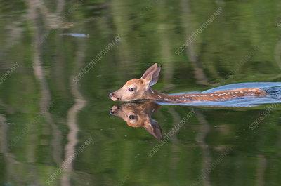Athletes swimming underwater - Stock Image - F013/8505