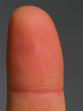 Fingertip showing Fingerprint Ridges