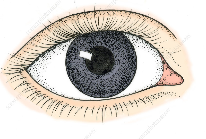 Illustration of Human Eye