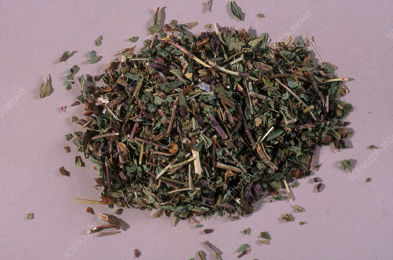 Germander Herb