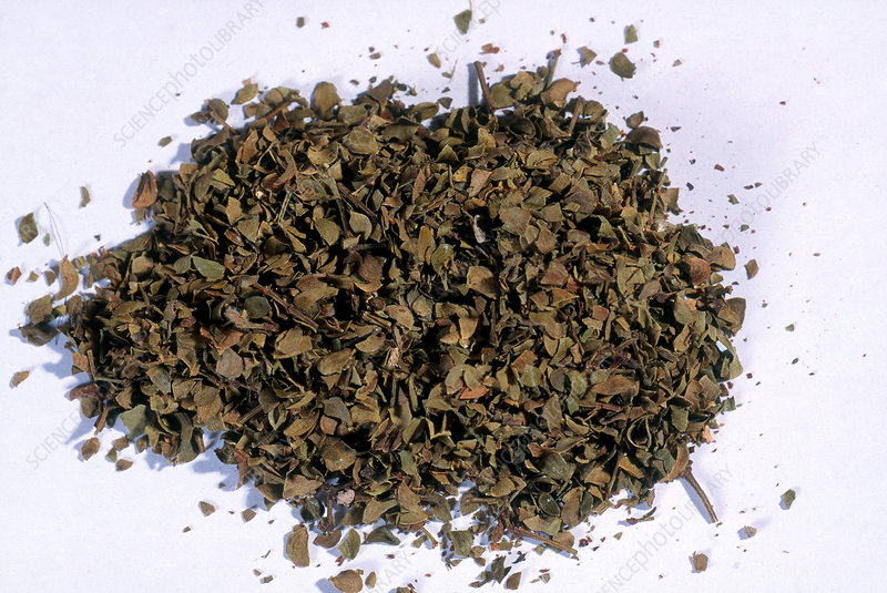 Chaparral Herb