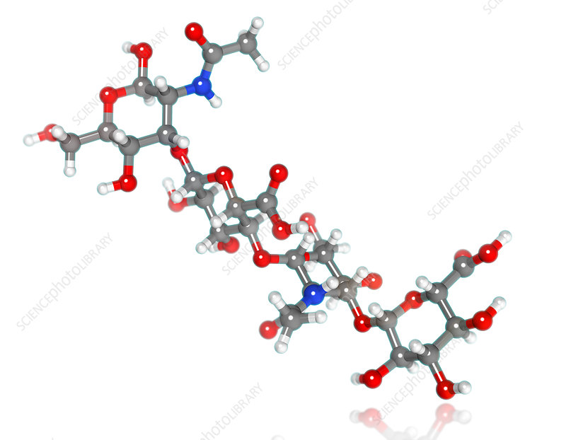 Hyaluronic Acid Molecular Model