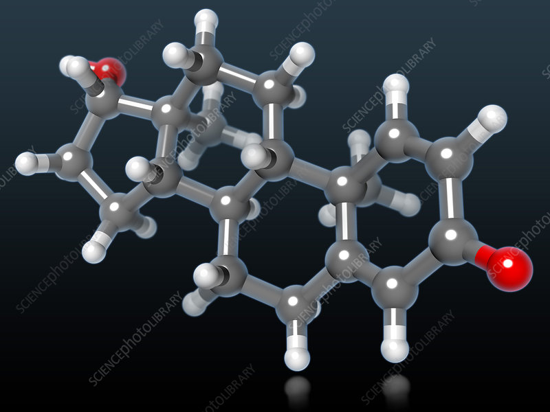 Dihydrotestosterone Molecular Model