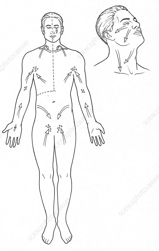 Direction of Lymph Flow