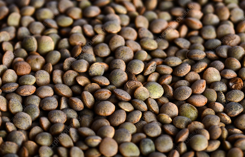how to cook brown lentils