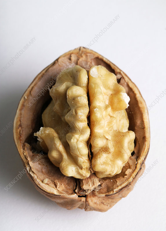 An Organic Walnut