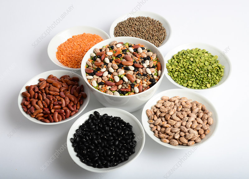 Assortment of Beans and Lentils
