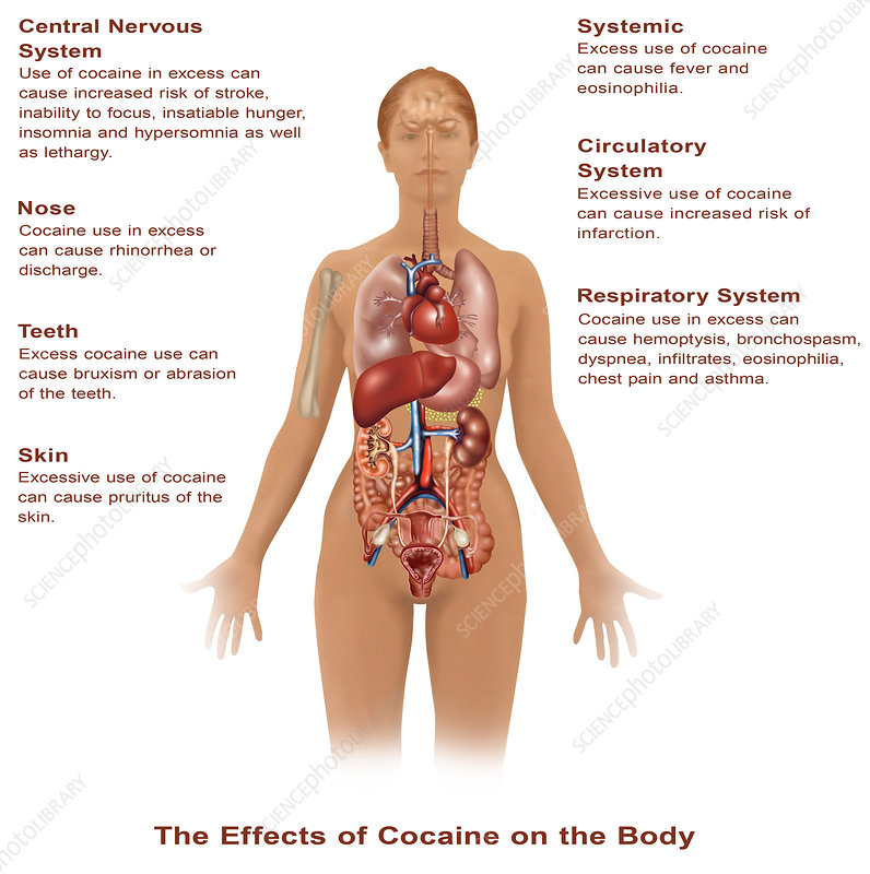 Effects of Cocaine Use