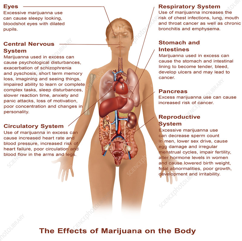 an overview of the effects of marijuana on the human body