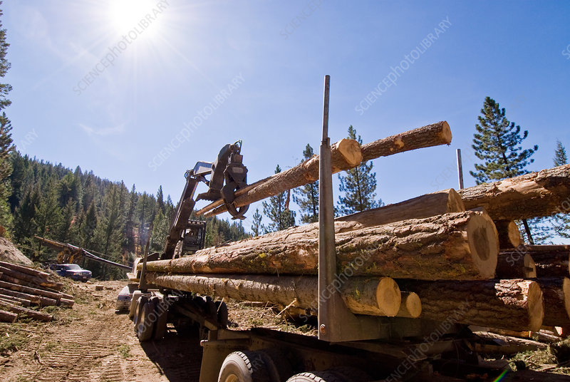 Loading Logs onto a Truck