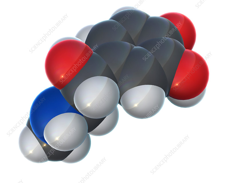 Epinephrine Molecular Model, Illustration