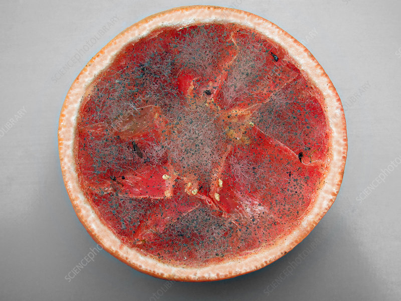 Mouldy Grapefruit
