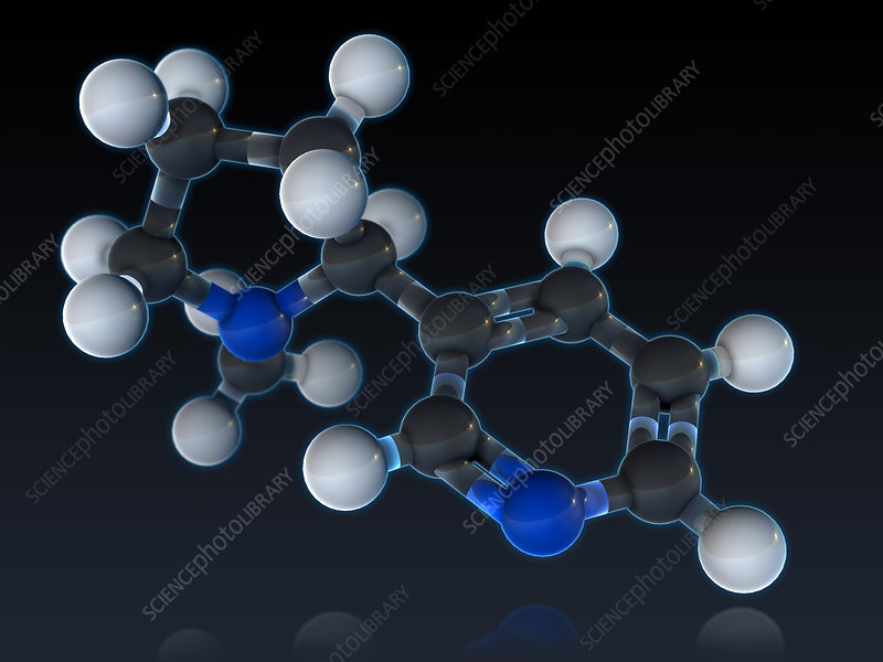 Nicotine Molecular Model, illustration