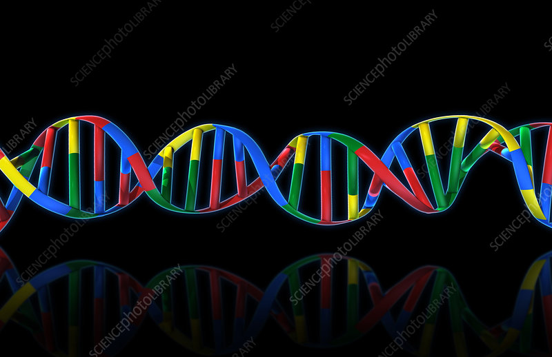 DNA, Ribbon Model, illustration