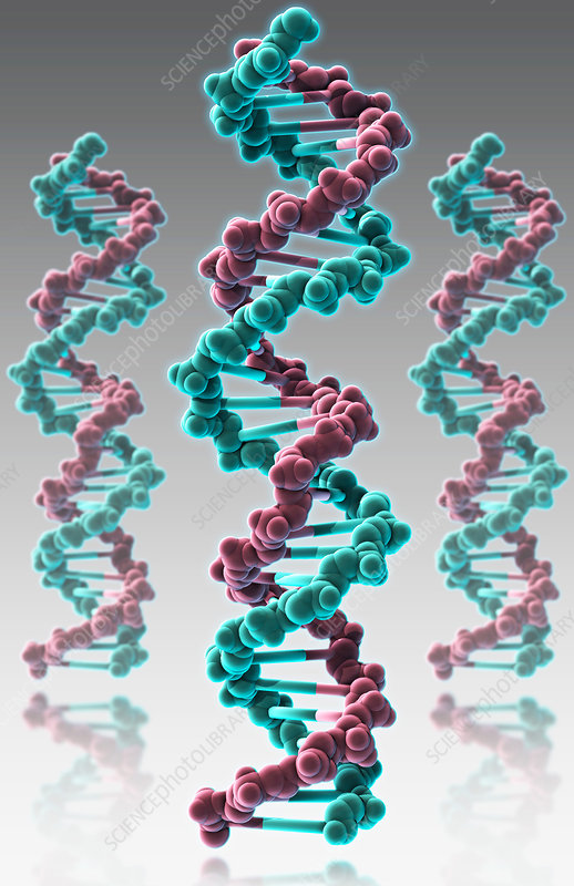 DNA, Molecular Model, illustration