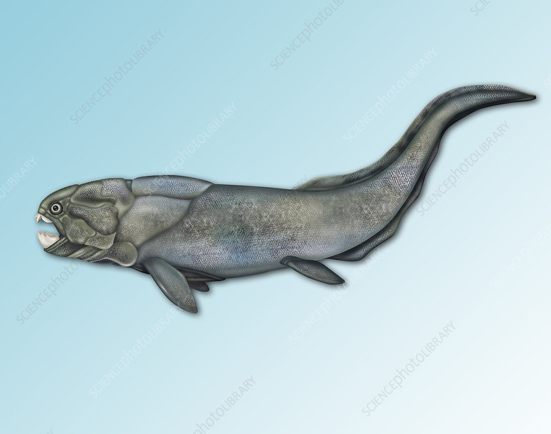 Placoderm, Extinct Fish, illustration