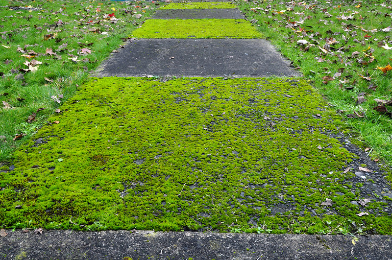Moss Growing on a Sidewalk