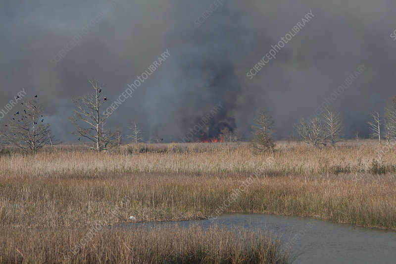 Apalachicola Marsh Controlled Burn