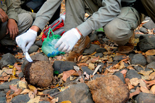 Researcher Sampling Elephant Dung