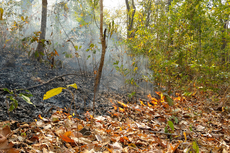 Leaf-Litter Fire