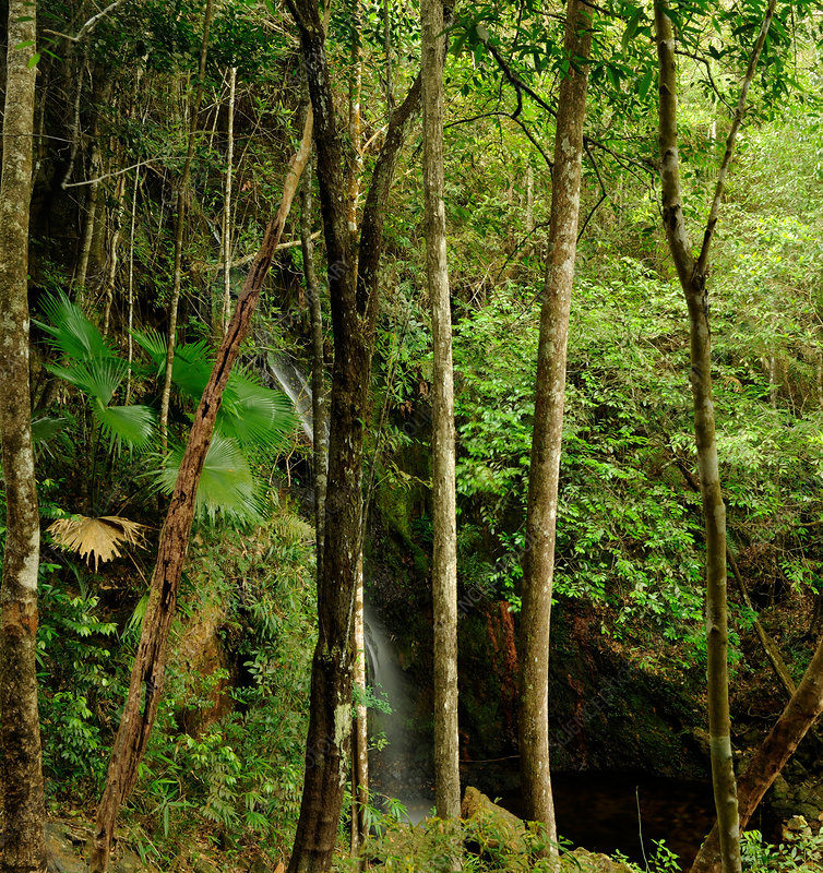 Malaysian Montane Rainforest with Waterfall
