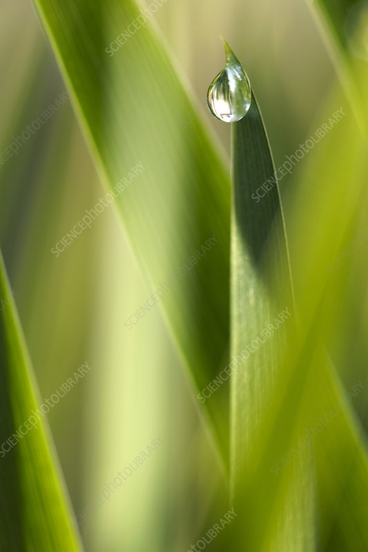 Dewdrop on Grass