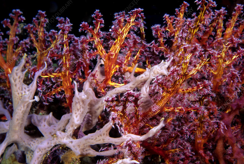 Soft Coral trees and Sponges