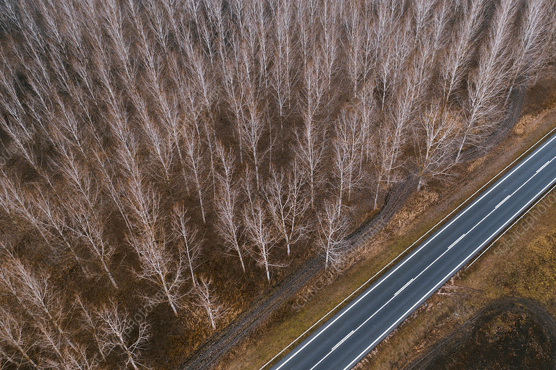Aerial photography of empty road and forest