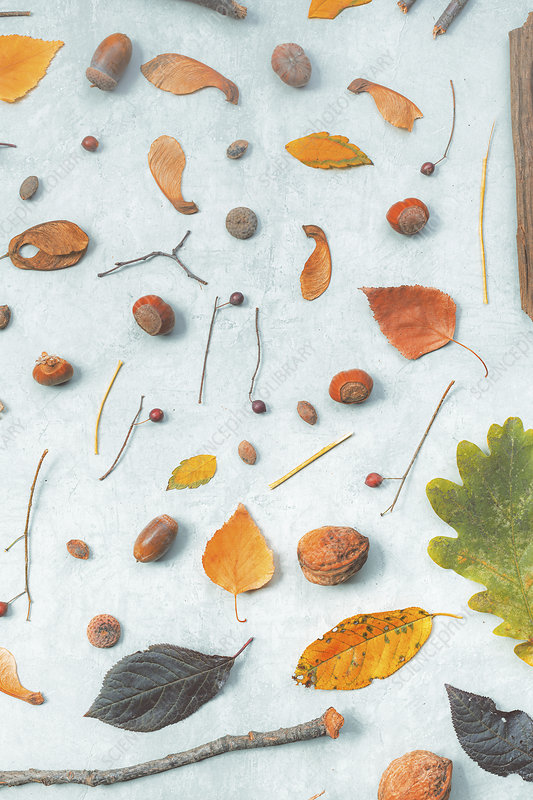 Autumnal decorations