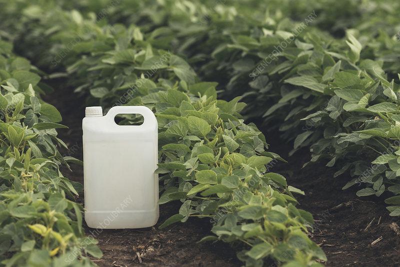 Soybean crop protection, conceptual image