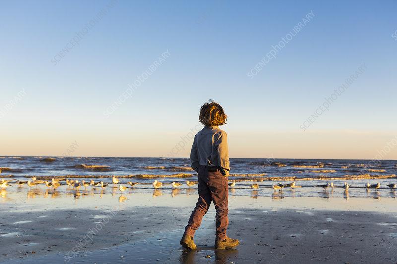 A boy walking on a beach, flock of seagulls on the sand