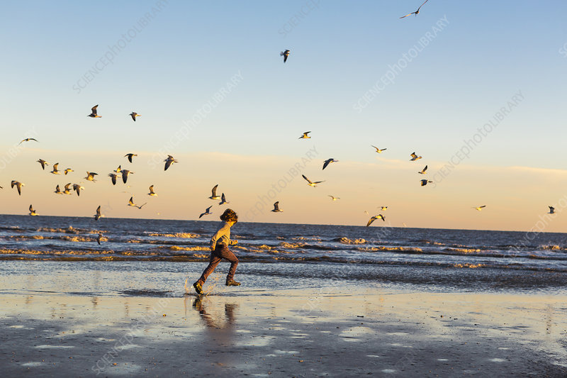 6 year old boy and seagulls