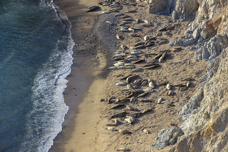 View of sea lions basking on narrow beach