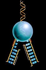 Artwork of mechanism of DNA replication