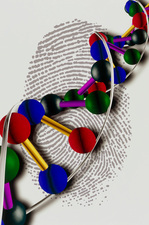 Artwork of DNA with base pairs on a fingerprint