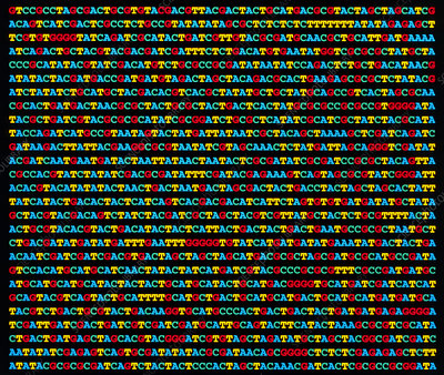 Artwork of a nucleotide sequence of DNA
