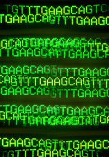 Multiple exposure image of DNA base sequences