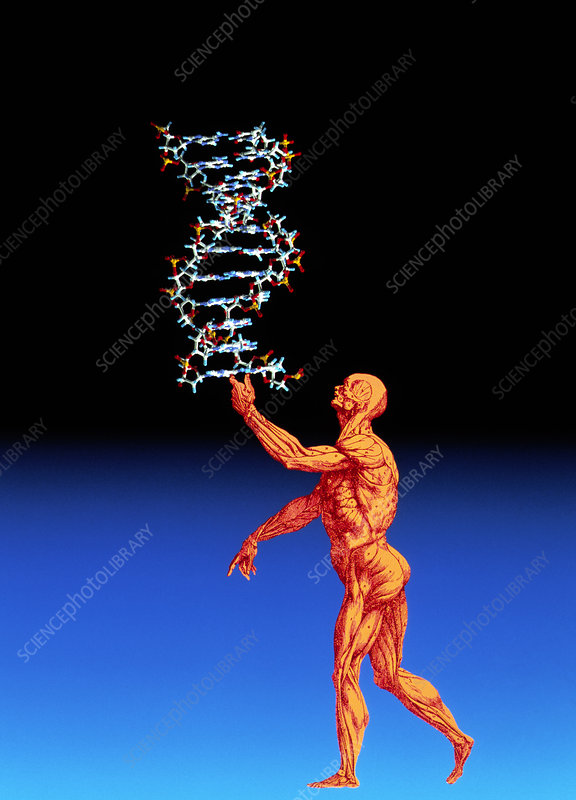 DNA and human body