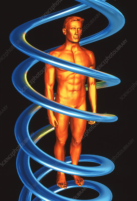 DNA and human